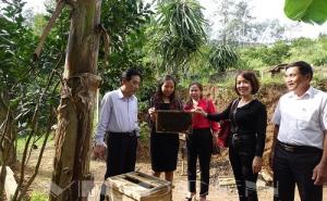 HTX nuôi ong Ân Phú (Hà Tĩnh) phát triển theo chuỗi giúp thành viên ổn định cuộc sống