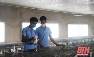 Hiệu quả của mô hình HTX chăn nuôi thỏ theo hướng liên kết