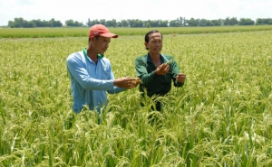 Quản lý sản xuất trồng trọt trong biến đổi khí hậu