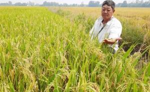 Sự thật về giống lúa Thiên Đàng