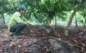 Hiệu quả từ mô hình tưới tiết kiệm phun mưa tận gốc cho cây cà phê-VnSAT
