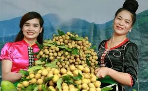 Sơn La: Khá giả nhờ bỏ ngô trồng nhãn