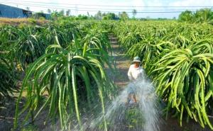 Biện pháp kỹ thuật bảo vệ vườn cây ăn trái