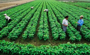 Liên minh HTX Việt Nam trình gửi Thủ tướng Chính phủ về thực hiện ưu đãi thuế, tiền thuê đất, phí và lệ phí đối với HTX, Liên hiệp HTX
