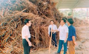 """HTX Dịch vụ Nông Lâm nghiệp Tổng hợp Công Tâm (Văn Yên): Phát huy lợi thế sẵn có của địa phương – """"chìa khóa thành công"""""""