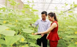 Bắc Ninh tập trung phát triển nông nghiệp hàng hóa