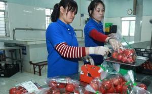 """Hà Nội """"hồi sức"""" hợp tác xã nông nghiệp"""