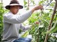 Lâm Đồng: Hợp tác xã của