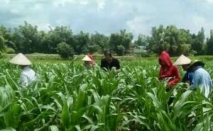 Điện Biên: Thiết thực đào tạo nghề nông nghiệp