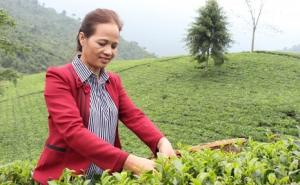 Nữ Giám đốc HTX La Bằng: Mong muốn sản xuất chè hữu cơ, xây dựng khu du lịch sinh thái giải quyết việc làm cho bà con dân tộc