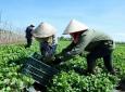 Phú Thọ hỗ trợ doanh nghiệp, hợp tác xã, hộ kinh doanh trong bối cảnh dịch COVID-19