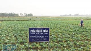 Bắc Giang: Hỗ trợ phát triển vùng nguyên liệu chế biến, xuất khẩu vụ Đông Xuân 2021-2022