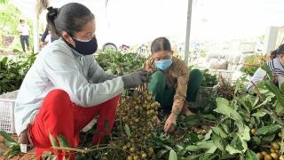 Tổng doanh thu của các HTX ở Cần Thơ sẽ đạt khoảng 2.600 tỉ vào năm 2022
