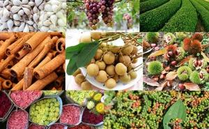Cùng các hợp tác xã, tổ hợp tác đưa nông sản lên sàn giao dịch điện tử