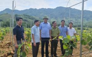 Phú Thọ: Nâng cao hiệu quả của phát triển kinh tế tập thể trong tình hình mới