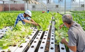Thành phố Hồ Chí Minh: Phát triển nông nghiệp công nghệ cao bền vững