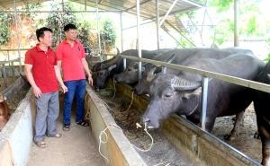 Tuyên Quang: Hàm Yên tạo nền tảng xây dựng nông thôn mới bền vững