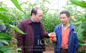 Chủ tịch Nguyễn Ngọc Bảo cùng đoàn công tác làm việc về việc triển khai dự án hỗ trợ KTTT, HTX tại huyện Ứng Hòa, Hà Nội
