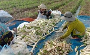 Hỗ trợ nông dân thu hoạch và tiêu thụ nông sản