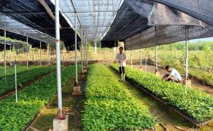 """Để HTX nông nghiệp đứng vững trên đôi chân của mình - Bài 1: """"Ngọn nến trước gió"""""""