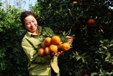 Cao Bằng đẩy mạnh phát triển kinh tế hợp tác xã nông nghiệp