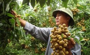 Kết nối các tỉnh phía Bắc cùng hỗ trợ đầu ra cho nông sản