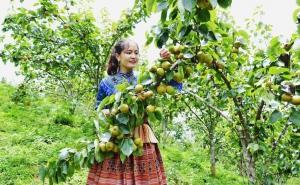 Phát huy vai trò của các hợp tác xã trong bao tiêu nông sản cho người dân