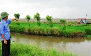 Tận dụng đất ruộng bỏ hoang chuyển đổi cơ cấu đạt giá trị kinh tế cao