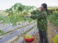 Thái Nguyên: Sản phẩm đắt giá của nông dân Liên Minh