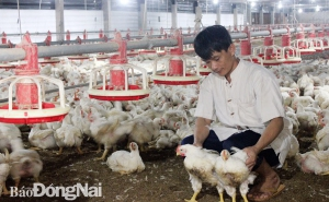Đồng Nai: Tăng cường kết nối, tránh đứt gãy chuỗi cung - cầu nông sản