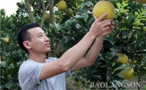 Lạng Sơn: Phát triển kinh tế tập thể, tập trung nâng cao chất lượng hoạt động