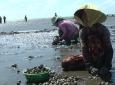 Ba Tri: Phát triển kinh tế tập thể làm nền tảng xây dựng Nông thôn mới