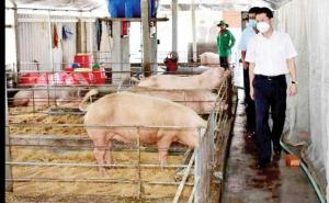 Thừa Thiên Huế: Lợi thế từ nông sản hữu cơ