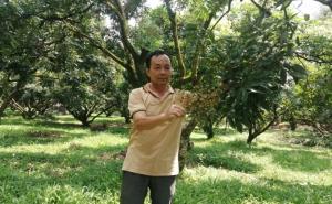Chú trọng cấp mã số vùng trồng, sẵn sàng cho xuất khẩu trái cây