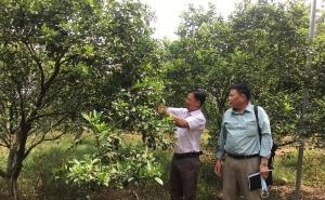 Bình Dương: Các hợp tác xã nông nghiệp chuyển biến mạnh mẽ, tích cực