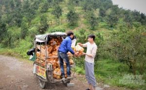 Tuyên Quang phát triển nông nghiệp theo mô hình hợp tác xã