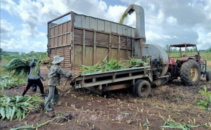 Điểm tựa vững chắc cho nông dân