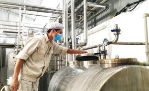 Hà Nội: Liên kết 3 nhà tiêu thụ sữa bò 4 sao