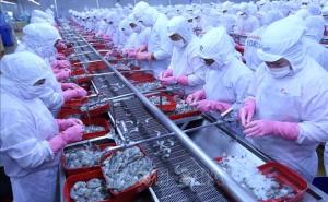 Hiện hữu nguy cơ đứt gãy chuỗi sản xuất, xuất khẩu thủy sản