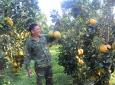 Niềm vui được mùa nông sản Tết