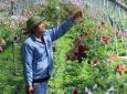 Hà Nội: Hỗ trợ nông dân phát triển kinh tế tập thể