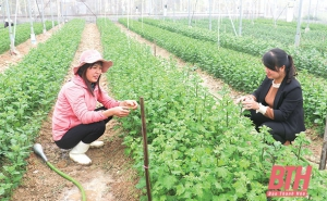 Huyện Đông Sơn đẩy mạnh ứng dụng công nghệ cao trong sản xuất nông nghiệp