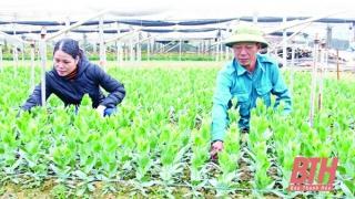 Tinh hoa nông nghiệp công nghệ cao