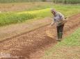 Hà Nam: Phát triển HTX chuyên ngành thúc đẩy khai thác thế mạnh sản xuất nông nghiệp ở địa phương
