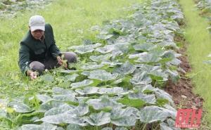 Phát triển nông nghiệp theo nhu cầu của thị trường