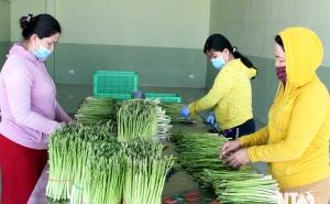 Ninh Phước: Kinh tế tập thể góp phần tham gia xây dựng nông thôn mới