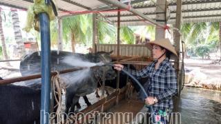 Hiệu quả kinh tế mang lại từ mô hình tổ hợp tác chăn nuôi bò