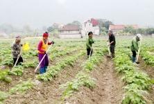 Thái Nguyên: Đổi mới đào tạo, tư vấn phát triển hợp tác xã