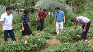 """Văn Chấn: Hợp tác xã - """"mắt xích"""" quan trọng trong chuỗi liên kết nông sản"""