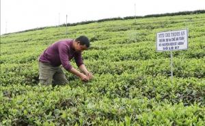 OCOP thúc đẩy kinh tế nông thôn Thái Nguyên
